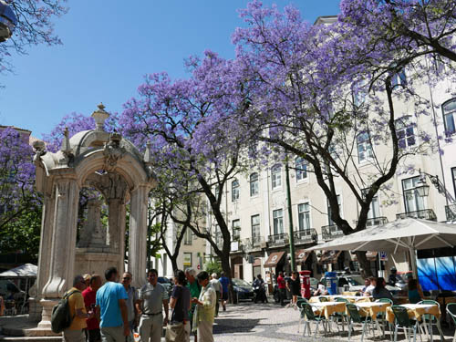 ジャカランタの咲く広場