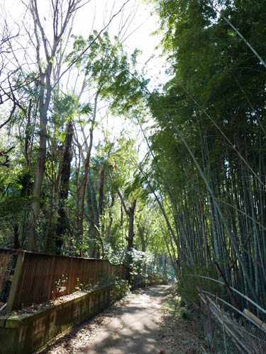 竹林の中を走る