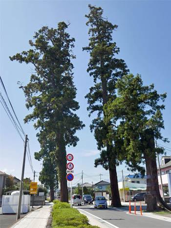 原市杉並木