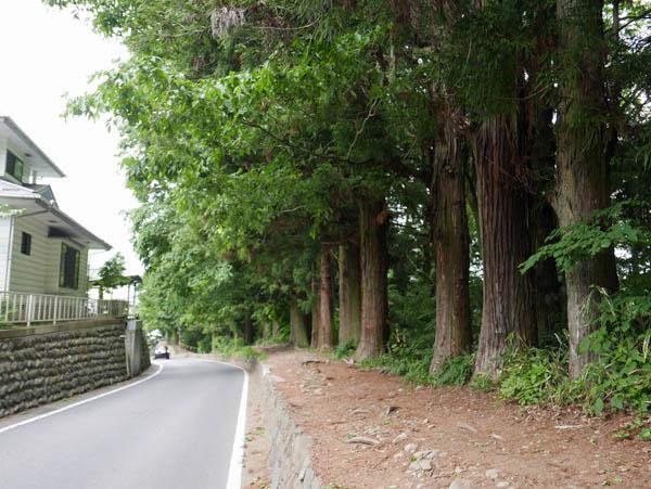春宮杉並木