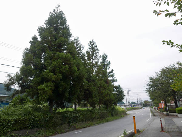 徳次郎6本杉