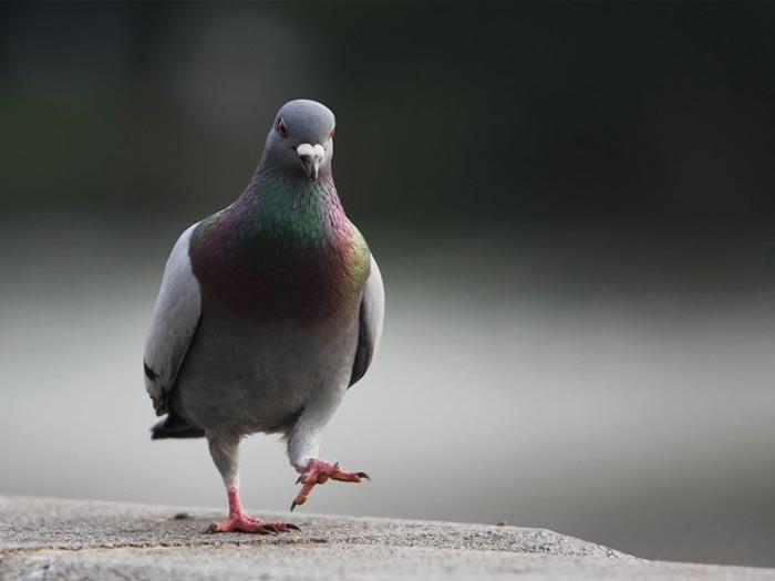 除け グッズ 鳩