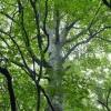 白神山地の旅 Part-2 岳岱と留山のブナ原生林