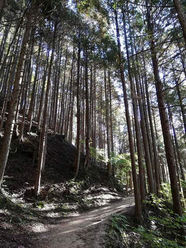 木曽の美林